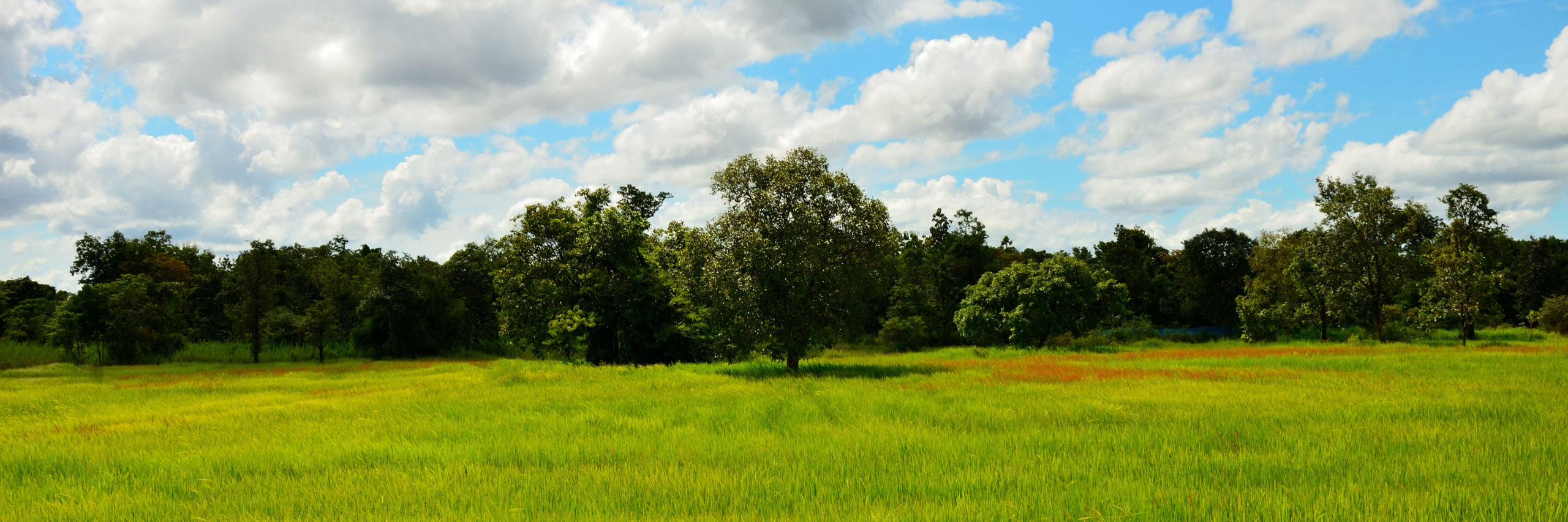 Cropped Green Pasture